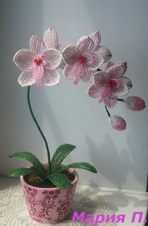 """Орхидея  """"Фаленопсис """"."""